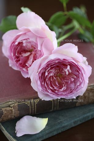 2輪の薔薇と洋書 FYI01037339