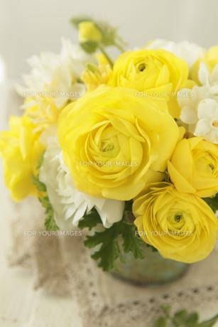 黄色のランキュラス FYI01037671