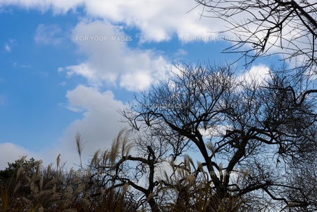 冬の木立と空 FYI01057096
