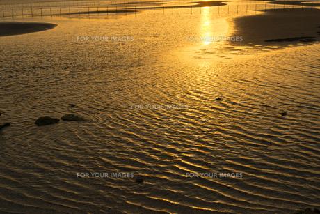 ふなばし三番瀬海浜公園・夕暮れの干潟 FYI01057195