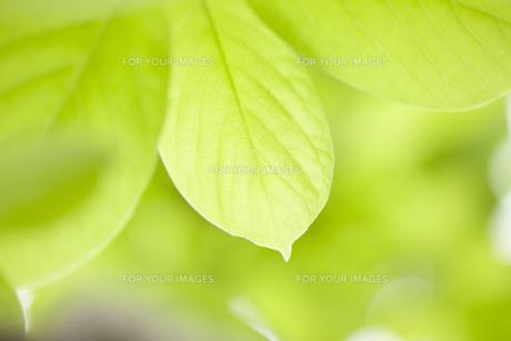 新緑イメージ FYI01059932