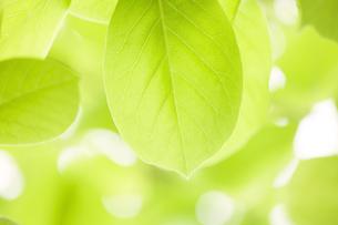 新緑イメージ FYI01059943