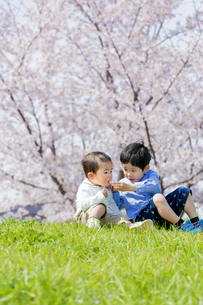 桜の咲く土手で遊ぶ兄と弟 FYI01075196