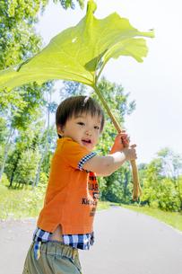 公園で大きなフキを傘がわりにする男の子 FYI01075249