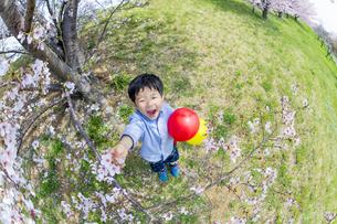 桜の咲く土手で遊ぶ男の子 FYI01075267