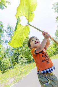 公園で大きなフキを傘がわりにする男の子 FYI01075353