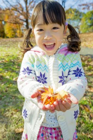 紅葉の公園でモミジの葉っぱを手のひらに乗せて笑う女の子 FYI01075587