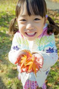 紅葉の公園でモミジの葉っぱを手のひらに乗せて笑う女の子 FYI01075636