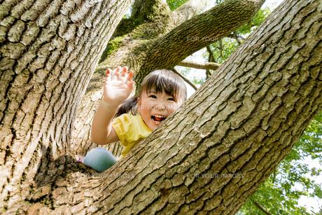公園の木に登る女の子 FYI01075942