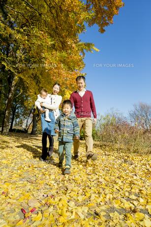 紅葉の公園を歩く4人家族 FYI01076180