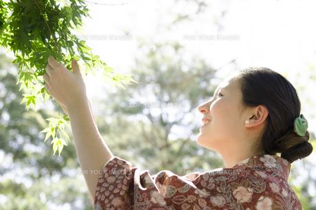 新緑のもみじを触る着物姿の横顔の女性 FYI01076692