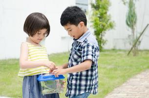 虫かごを持っている子供たち FYI01077411