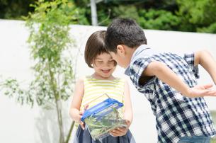 虫かごをのぞいている子供たち FYI01077791
