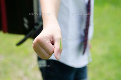 ランドセルを背負ってバッタを手に乗せている男の子の素材 [FYI01078016]