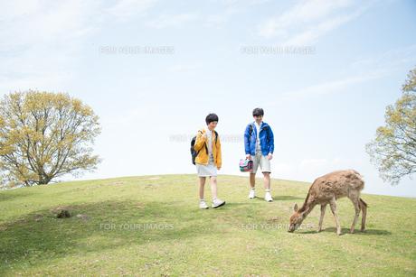 鹿を見ている男女 FYI01078471
