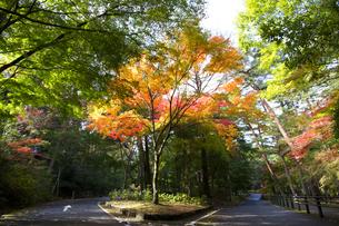 秋の紅葉の神戸再度公園 FYI01096695