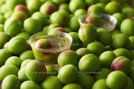 梅酒と梅の素材 [FYI01109834]