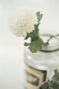 花と瓶 FYI01121723