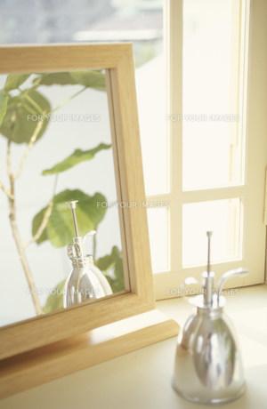霧吹きと鏡に映る植物(フィカス,ウンベラータ) FYI01122609