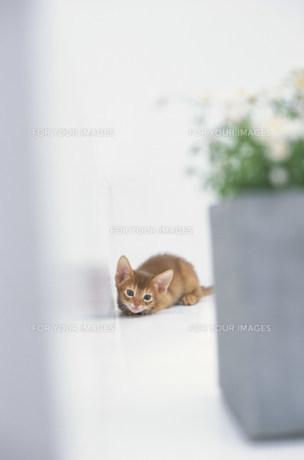 壁際で横たわる猫 FYI01123004