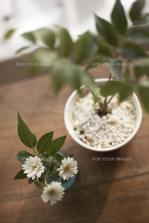 グリーンと花 俯瞰 FYI01123780