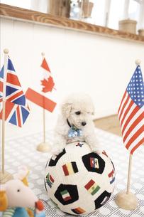 サッカーボールとプードル FYI01127835