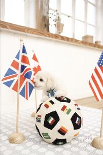 サッカーボールとプードル FYI01127898