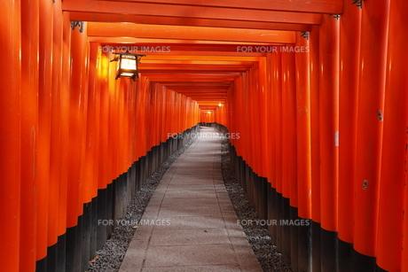 1月冬 伏見稲荷神社 京都の冬景色 Fyi01130461 気軽に使える写真