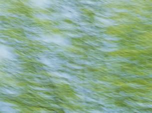 流れる新緑 FYI01144192