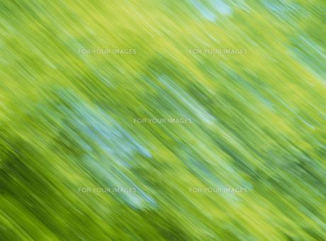 流れる新緑 FYI01144621