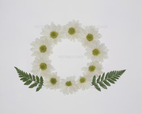 白いマーガレットのリース FYI01145973