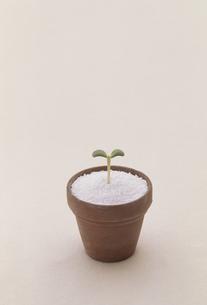 植木鉢にフタバ FYI01146291
