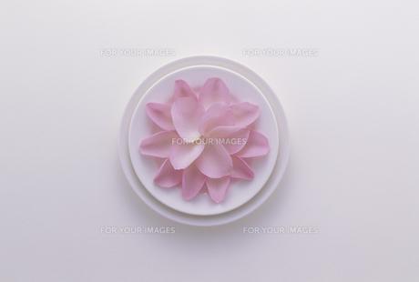 白い皿にピンクの花びら FYI01146362