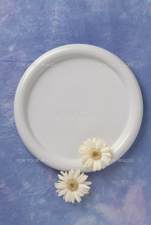 皿とガーベラ FYI01146481