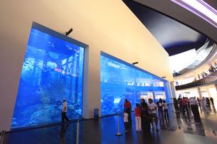 ドバイ・モールの水族館 FYI01153703