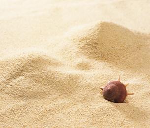 砂浜の上の貝殻 FYI01153755