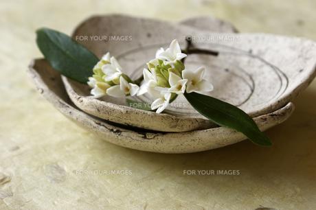 器と沈丁花 Fyi01157085 気軽に使える写真イラスト素材