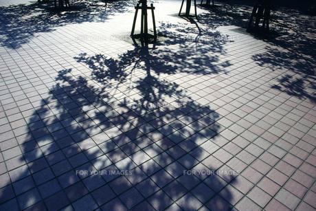 街路樹の影 FYI01158375