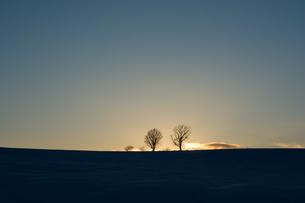 冬の夕暮れと冬木立 美瑛町 FYI01160588