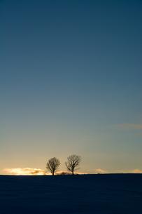 冬の夕暮れと冬木立 美瑛町 FYI01160589