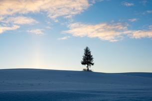 夕暮れの雪の丘に立つマツの木 美瑛町 FYI01160592