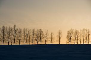 冬の夕暮れとシラカバ並木 美瑛町 FYI01160600