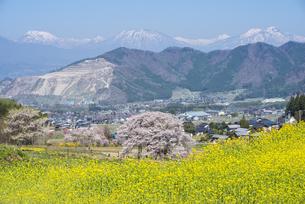 信濃路の春景色 FYI01161668