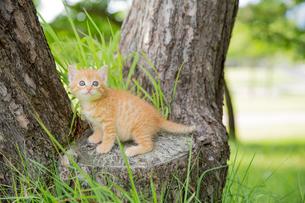 子猫 FYI01165394