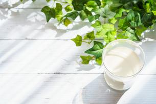 テラスでミルク FYI01168275