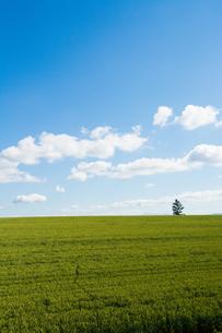 青空と緑のムギ畑 FYI01174122