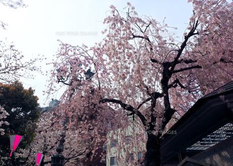 東京 墨田川 春の夜景 FYI01176235