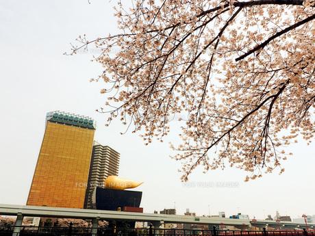 東京 墨田川 春の夜景 FYI01176237