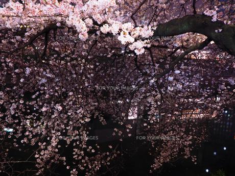 東京 神楽坂 春の夜景 FYI01176249