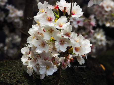 東京 神楽坂 春の夜景 FYI01176252